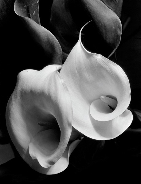 """Two Callas,"" by Imogen Cunningham"