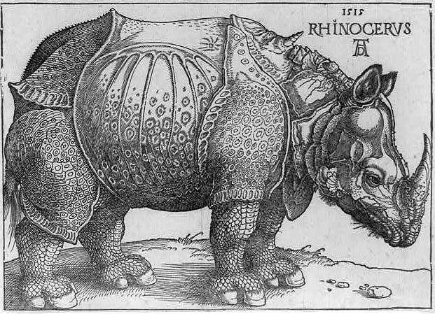 Portrait of a rhinoceros by Albrecht Dürer, 1515